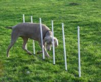 Agility Weave Poles, 6 Cost Effective Dog Weaving Poles